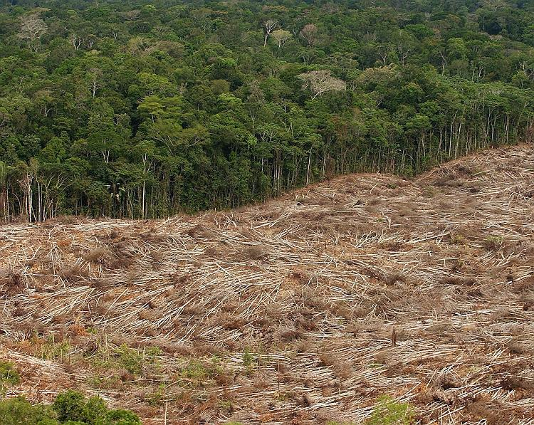 deforestation and uganda Impacts of deforestation on vector impacts of deforestation on vector-borne disease even in countries where it was already endemic, such as uganda and.